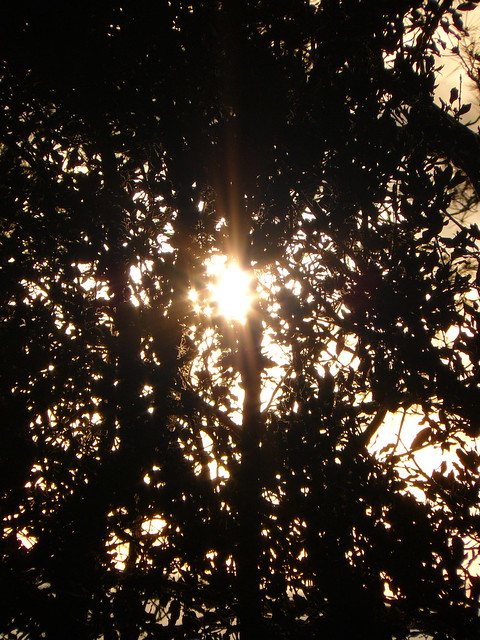 sun between the branches