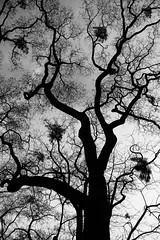 Lines (Kaosher) Tags: winter abstract tree berlin nature germany deutschland line curve shape botanicalgarden lightshade wintertree natureinwinter canon5dmarkii kaosher blackwhiteline