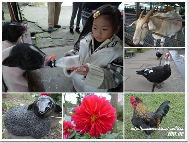 宜農牧羊場(1)