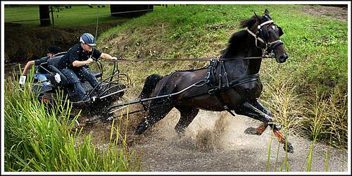 Pferdemarathon bei Oude Pekela, Niederlande