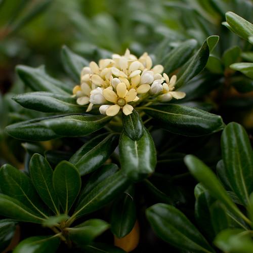 Flowering Shrubbery