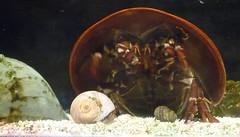 Newport Aquarium Kentucky Paula Pic (16) (Photo Nut 2011) Tags: aquarium kentucky newportaquarium