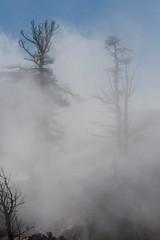 Hiding in the Steam (BigSkyKatie) Tags: winter mist hot tree landscape march nationalpark steam mammoth springs yellowstone skeletons vapor hydrothermal portraitorientation katielasallelowery