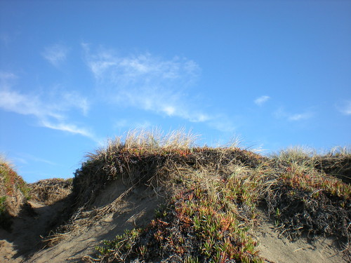 Sand dune with red flowers on it, and a blue sky with wispy white clouds.