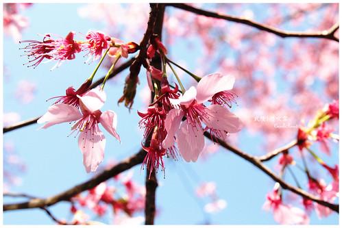 2011-03-04 陽明武陵 201 r