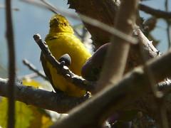 P1150360 (babsybou) Tags: travel india birds silent watching kerala du valley yatra sud inde attapadi birdswatching babsybou malleeshwaramjunglelodge pettickal