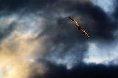 Cloud Splitter (redbanshee) Tags: photography photo foto image picture pic fotografia nwn immagine redbanshee colorannoaprile