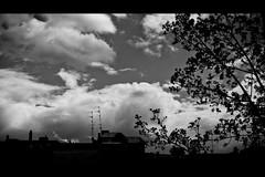 backyard & tree (dongga BS) Tags: blackandwhite bw backyard basel sw schwarzweiss 169 hinterhof canoneos50d ef35mmf14lusm kleibasel