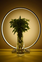 casual piety (mi ne volimo alu) Tags: abstract symmetry circle light lamp basil vase glass transparency aura yellow monochrome silhouette artificialstilllife stillife colour green leaves bouquet indoor