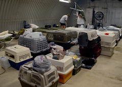Naval Station Guantanamo Bay community members and their pets are moved to emergency shelters in preparation of Hurricane Matthews arrival. (Official U.S. Navy Imagery) Tags: hurricanematthew storm gtmo meteorology weather shelter evacuation navy usnavy navalstationguantanamobay cuba