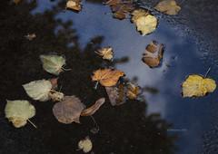 Autunno (IMAphotoArt) Tags: foglie morte autunno acqua pozzanghera colori stagione