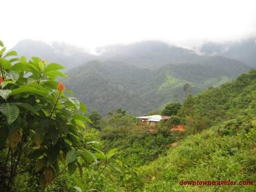 Love essay sample jungle trekking