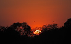 """Calling it a day (""""The Wanderer's Eye Photography"""") Tags: sunset india slr silhouette canon photography eos evening photos dusk bangalore dslr canon450d rebelxsi rubenalexander thewandererseye"""