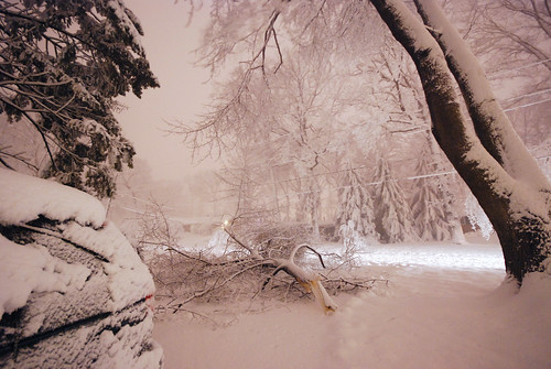 Crack of thundersnow? No, impact of a giant branch that almost smashed our car!