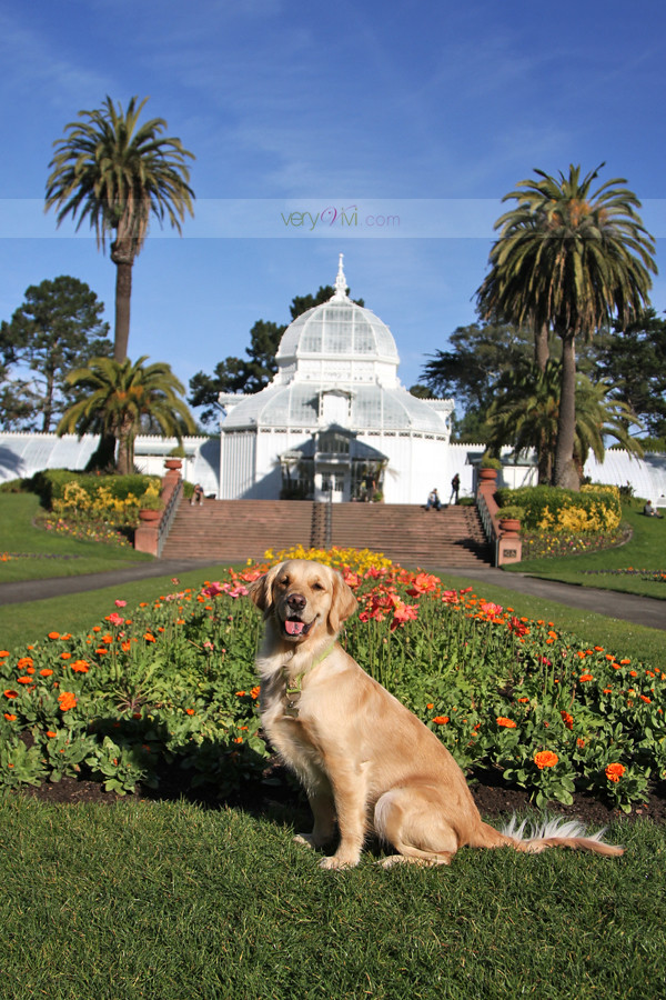 The Conservatory of Flowers in San Francisco's Golden Gate Park