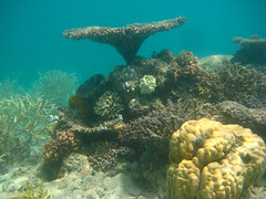 Togean underwater