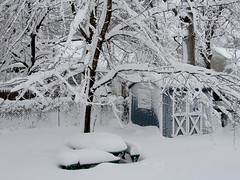Fairy-Tale Snow (hpaich) Tags: desktop trees winter wallpaper snow cold backyard background branches shed blizzard desktopwallpaper desktopbackground