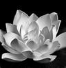 Lotus ( Explored #44 ) (-william) Tags: lotus sb600 hss
