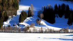 Schatten im Pfitschtal (mikiitaly) Tags: schnee winter italy wald bäume schatten südtirol altoadige pfitschtal flickrchallengegroup pfitsch elementsorganizer
