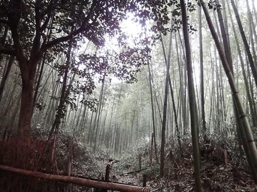 kyoto arashiyama 5_3