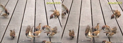 3D flying sparrows