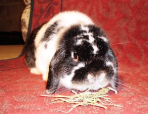 Rabbit and Hay
