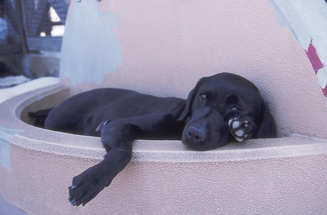 犬のフリー写真素材