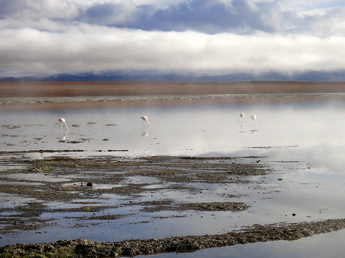 Flamingos in the Lagoon