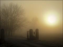 L' alba fra la nebbia (Mazzaq-Mauro Mazzacurati) Tags: fog alba poesia sole nebbia pianura pascoli mazzaq allegrisinasceosidiventa