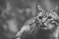 () () Tags: bw night cat taiwan taipei