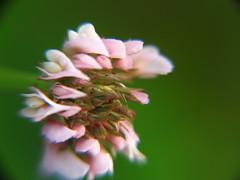 macro life (Luz Adriana Villa A.) Tags: flower macro 30 canon de lens is flor carmen sx 10x luza viboral luzavilla sx30is