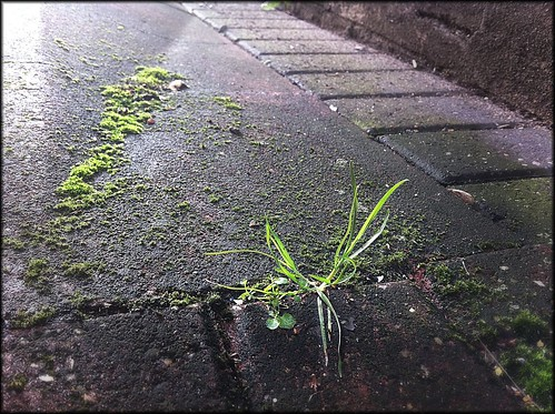grass through pavement