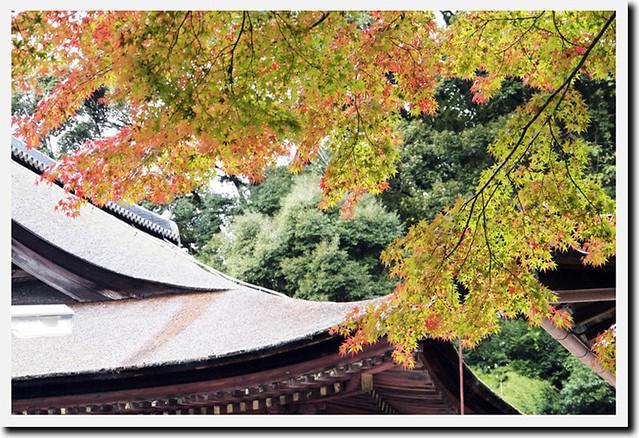 101115_111803_長弓寺_本堂(国宝)