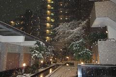 雪が降る夜に