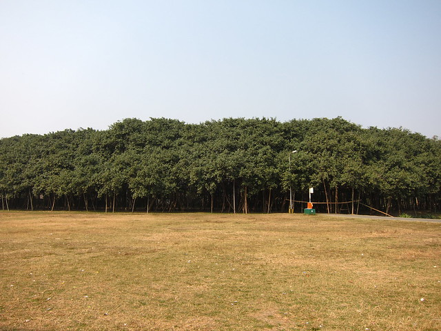 The biggest Banyan tree in India