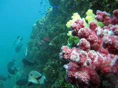 IMG_9122 (d3_plus) Tags: snorkeling izu  g10  hirizo canonpowershotg10