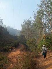 100_0153 (travellersai) Tags: kerala treehouse wayanad teaestate wildboar bandipur chital vythri banasuradam soojiparafalls streamvalleyresorts