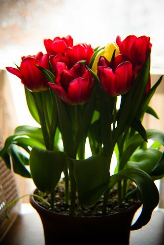 flowers-1774.jpg