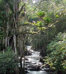 The Minca River (Hesperia2007) Tags: mountains southamerica forest scenery colombia view lodging north eldorado coastal sierranevada habitat santamarta minca neotropics proaves magdalenadepartment mincariver