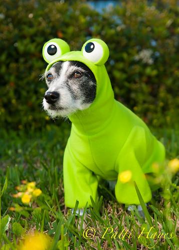Frog Dog 7/52