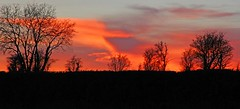 Intensity... (Geraldine Curtis) Tags: sunset sky silhouette cotswolds intensecolour