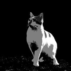 (jovni) Tags: cat thecure soundtrackmonday posteriseifyourshotiscrapandpeoplemightnotnotice