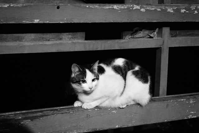 Today's Cat@2011-03-01