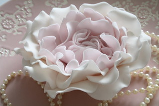 Peony rose by Cotton and Crumbs