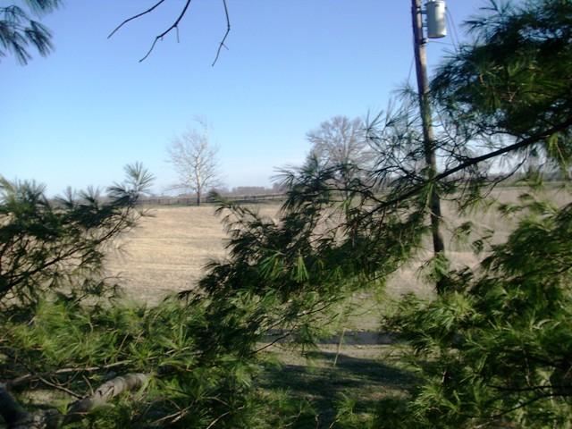 tree climbing 035