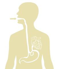 Through the Stomach (return the sun) Tags: food way design heart stomach human mans diagram