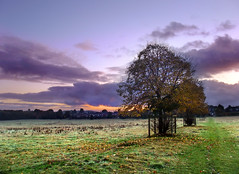 Dawn over Basingstoke Common (Beardy Vulcan) Tags: autumn england tree fall field clouds dawn october hampshire common 2009 parklane basingstoke oldbasing loddonvalley civildawn basingstokecommon