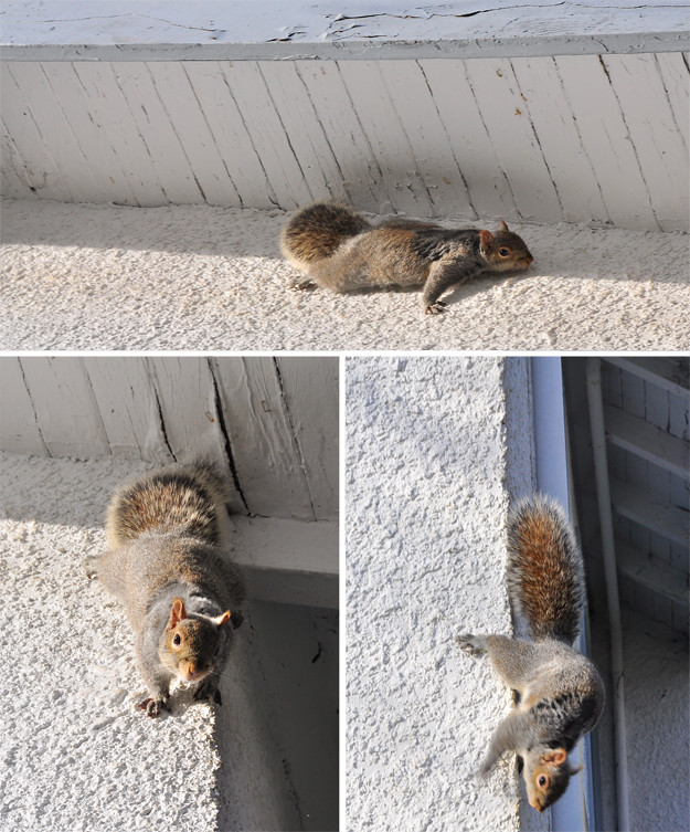 Squirrel compilation 2