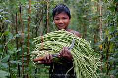 A boy harvests long beans in the Chittagong Hill Tracts (Alex Treadway) Tags: boy plant male green nature vegetables field standing outdoors happy photography holding asia child cut traditional farming working harvest knife culture content bamboo hills crop gathering cutting land fields labour environment daytime poles growing farmer sickle agriculture longbeans eastern showing runnerbeans bangladesh bandarban naturalworld collecting oneperson clearing climbers indigenous carrying frontview harvesting cultivate trellising traveldestinations climbingplants goodharvest colourimage chittagonghilltracts 010years