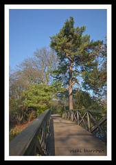 AT THE END OF THE BRIDGE (vicki127.) Tags: bridge tree green water leaves cheshire canon300d branches bluesky nationaltrust soe knutsford tattonpark digitalcameraclub youmademyday flickraward ilovemypics mygearandme adobephotoshopcs5 ringofexcellence vickiburrows vicki127